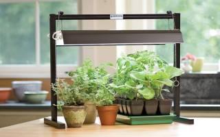 Как выбрать светодиодную лампу для выращивания рассады и комнатных растений