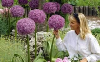 Цветы многолетники семенами