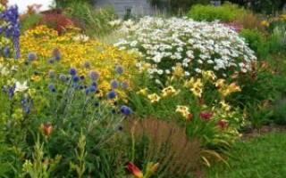 Самые красивые неприхотливые цветы для дачи