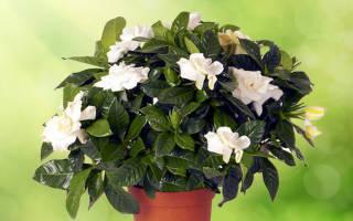 Цветы домашние растения и цветы