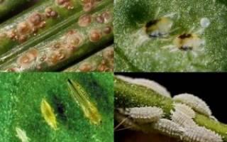 Вредители комнатных растений и меры борьбы с ними