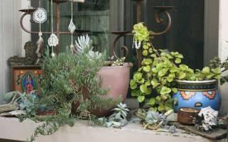 Аммиачная селитра для комнатных растений