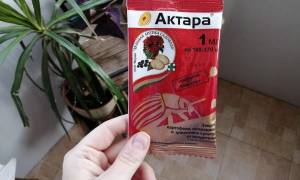 Как развести актару для полива комнатных растений от мучнистого червеца