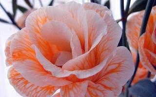 Цветы лизиантус органичное украшение для дома и торжества с фото