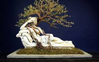 Бонсай японское дерево семена и общая информация