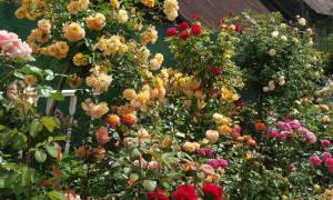 Разбивка розария план и схема