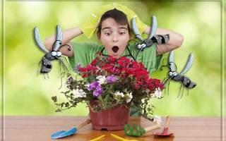 В земле комнатных растений завелись мошки как вывести
