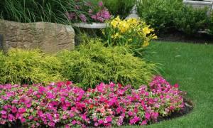 Однолетние растения примеры однолетние травянистые растения