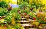 Пермакультура практическое применение для сада огорода