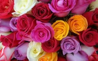 Розы разновидности и сорта с фото