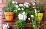 Самые неприхотливые цветы для балкона названия фото