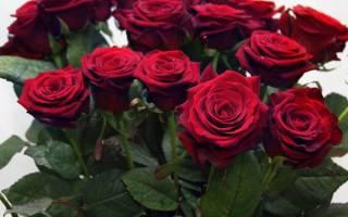 Розыхамелеоны в цветочных композициях