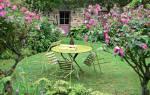Штамбовые розы в ландшафтном дизайне фото