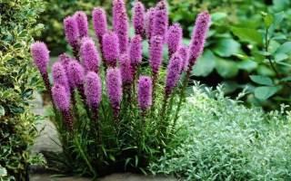 Цветы для зимнего сада в частном доме