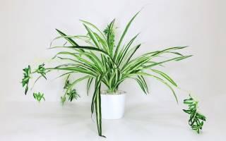 Здоровье и комнатные растения