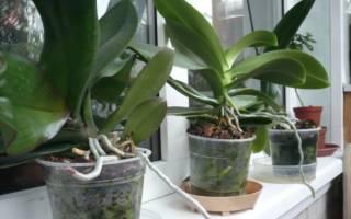 Выращивание орхидей в самодельных горшках