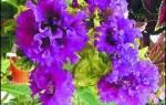 Цветы на веранде продляют лето