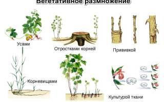 Уникальные цветы из черенков или вегетативка