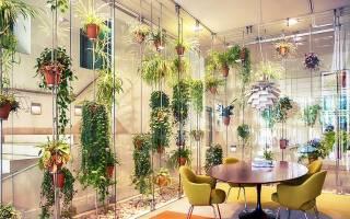Дополнительное освещение для комнатных растений