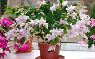 Как правильно поливать комнатные цветы зимой