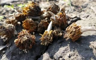 Цветы собрать семена