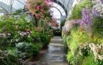 Цветы для зимнего сада фото