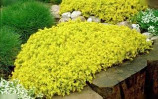 Цветы для ленивых бордюр и клумба без хлопот