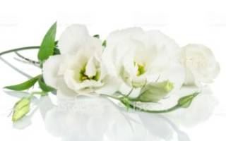 Цветы с белыми цветами фото и названия