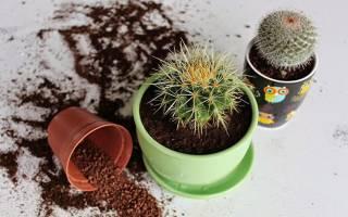 Виды и названия домашних кактусов