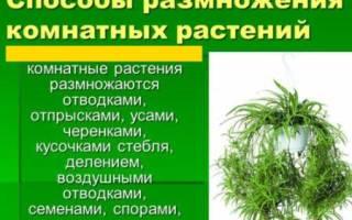 Как называется способ размножения комнатных растений