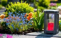 Самые засухоустойчивые цветы для кладбища