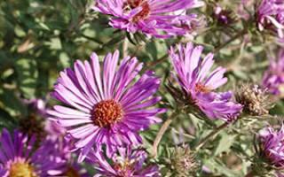 Цветы для сада в октябре видео