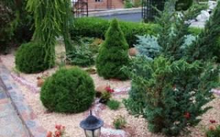 Рокарий из хвойников перед домом фото