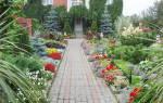 Самые неприхотливые и многолетние цветы для дачи