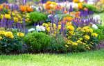 Клумба непрерывного цветения из однолетников схема