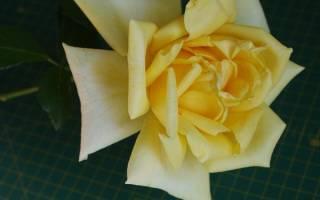 Строение листа розы