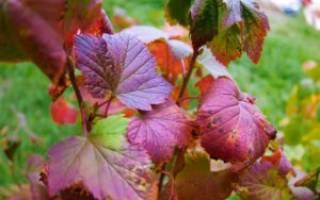 Уход за цветущими кустарниками осенью