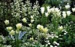 Цветник с многолетниками в белоголубой гамме