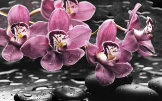 Как выпускает стрелку орхидея фото