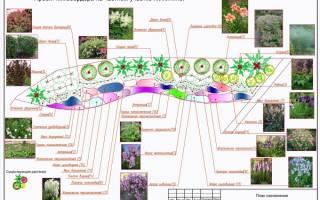 Растения для миксбордера из многолетников