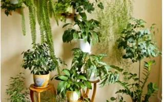 Если у вас дома есть комнатное растение проведите его подкормку