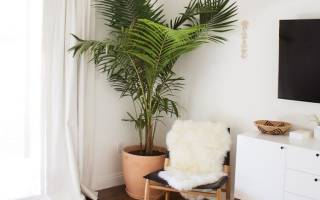 За комнатной пальмой уход