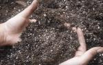 Как пропарить землю для комнатных цветов