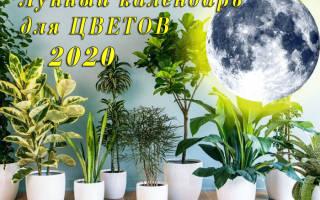 Благоприятные дни для обрезки комнатных растений